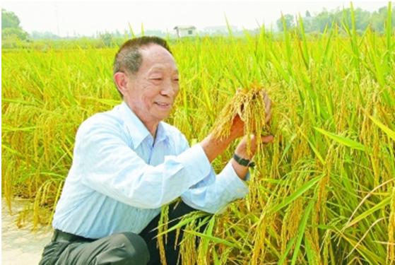 """袁隆平:稻与""""道"""""""